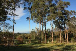 Monte Verde Cabañas & Camping