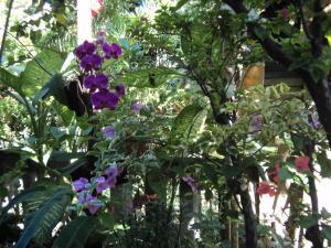 Villa Bhuana Alit, Гостевые дома  Убуд - big - 84