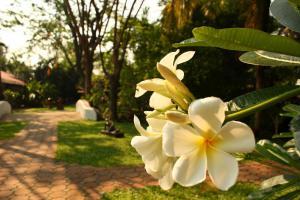 Secret Garden Chiangmai, Hotely  San Kamphaeng - big - 57