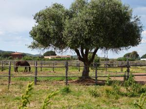 Tenuta Agricola dell'Uccellina, Farm stays  Fonteblanda - big - 131