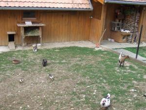 Ezerjó Ökofogadó, Guest houses  Őriszentpéter - big - 16