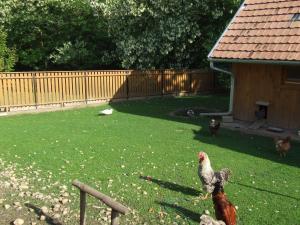 Ezerjó Ökofogadó, Guest houses  Őriszentpéter - big - 15