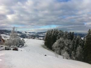 Hirschen Wald