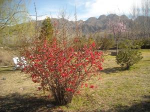 Cabañas Rio Mendoza, Lodge  Cacheuta - big - 18