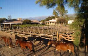 La Vaca Tranquila, Bed and Breakfasts  Cafayate - big - 25
