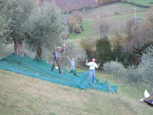 Casale Giuncheto, Farmy  Pilonico Paterno - big - 53