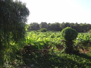 Vinya d'en Palerm (38 of 76)