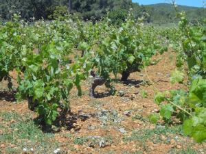 Vinya d'en Palerm (8 of 76)