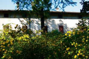 Agriturismo Solimago, Farm stays  Solferino - big - 51