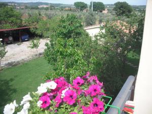 Agriturismo Le Macine, Agriturismi  Magliano in Toscana - big - 2