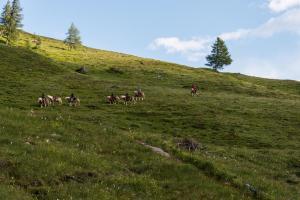 Landhaus Alpenrose - Feriendomizile Pichler, Penzióny  Heiligenblut - big - 45