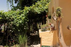Casa de Huesped, Hostely  Cafayate - big - 6
