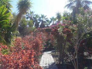 Residencial Casabela, Apartments  Los Llanos de Aridane - big - 50