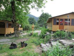 Bio Yard, Penzióny  Lagodekhi - big - 21