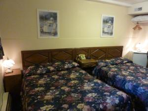 Budget Room with Two Double Beds - Semi Basement