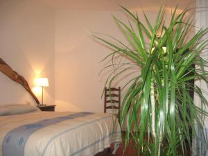 Il Vecchio Ginepro, Bed and Breakfasts  Arzachena - big - 10