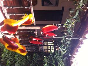 Hotel Los Frayles, Hotels  Villa de Leyva - big - 33