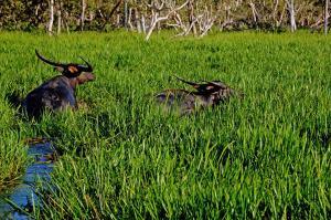 Bamurru Plains (4 of 30)