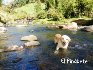 El Pinabete Finca & Cabañas, Hostince  La Granadilla - big - 21