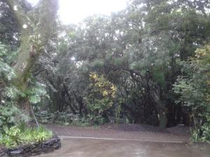 Flor de Mayo Airport Nature Reserve, Guest houses  Alajuela - big - 33
