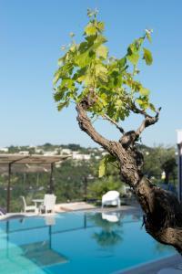 Al Mirador Resort, Hotel  Selva di Fasano - big - 74