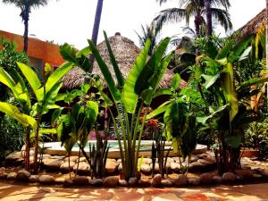 One Love Hostal Puerto Escondido, Hostely  Puerto Escondido - big - 49