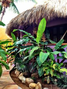 One Love Hostal Puerto Escondido, Hostely  Puerto Escondido - big - 9