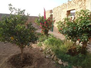 Takad Dream Hostel Rural, Hostels  Sidi Bibi - big - 8