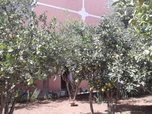 Takad Dream Hostel Rural, Hostels  Sidi Bibi - big - 22