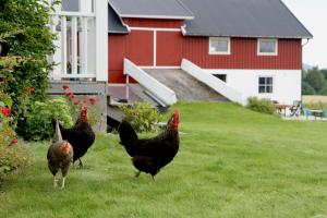 Lerkekåsa Vingård, Farm stays  Gvarv - big - 7