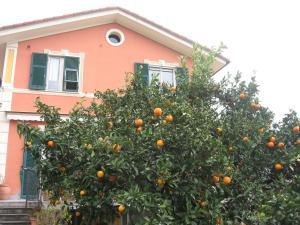 Le clementine b b affittacamera nei camogli liguria italy