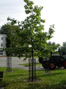 Hotel Kosmonauty Wrocław-Airport, Hotely  Vroclav - big - 43