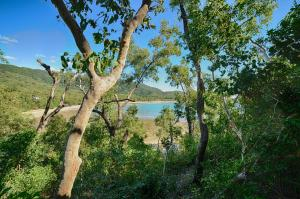 Thala Beach Nature Reserve, Port Douglas (11 of 81)