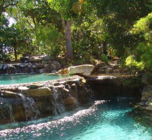 Thala Beach Nature Reserve, Port Douglas (5 of 81)