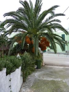 Apartment White Lady, Ferienwohnungen  Trogir - big - 8