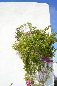 Es Pas Formentera Agroturismo, Venkovské domy  Es Calo - big - 63