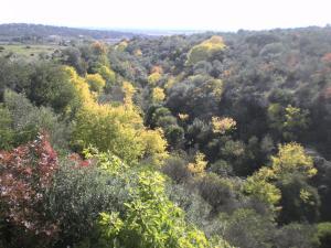 Centro de Naturaleza Cañada Verde, Farmházak  Hornachuelos - big - 10
