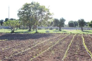 Masseria Valente, Farmházak  Ostuni - big - 50