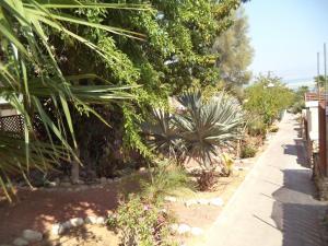 Rose Dead Sea Neve Zohar, Penzióny  Neve Zohar - big - 22