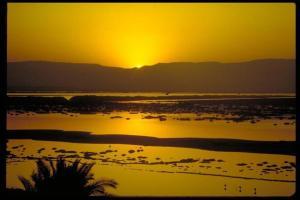 Rose Dead Sea Neve Zohar, Penzióny  Neve Zohar - big - 21