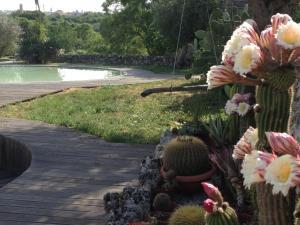 Trulli&Stelle B&B, Загородные дома  Noci - big - 71