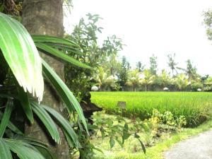 Villa Bhuana Alit, Гостевые дома  Убуд - big - 36