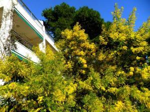 Apartments Staničić, Apartments  Brela - big - 84
