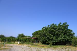 Agriturismo Il Gelsomino Ritrovato, Фермерские дома  Милаццо - big - 67