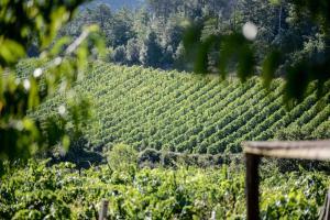 Agriturismo Fattoria Di Gratena, Farmházak  Pieve a Maiano - big - 83