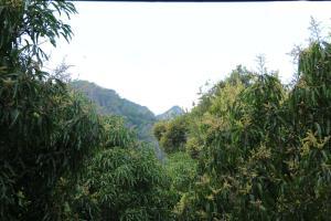Forest Glen Bungalow - Dambulla, Guest houses  Dambulla - big - 16