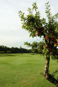 Abbekås Golfrestaurang & Hotell, Отели  Аббекас - big - 29
