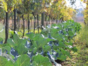 Agriturismo B&B Vallegiorgio, Bauernhöfe  San Lorenzo Nuovo - big - 14