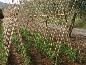 Agriturismo B&B Vallegiorgio, Farmházak  San Lorenzo Nuovo - big - 12