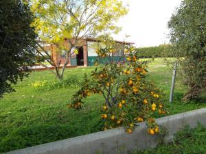 Agriturismo Il Gelsomino Ritrovato, Фермерские дома  Милаццо - big - 57